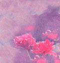 Red peonies. Painting. Oil texture Flower background Royalty Free Stock Photo