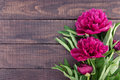 Red peony flower on dark rustic wooden background with empty spa Royalty Free Stock Photo