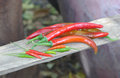 Red pepper and bird Stock Images