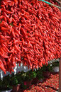 Red pepper series Royalty Free Stock Photography