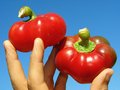 Red peppers in hand Royalty Free Stock Photography