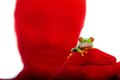 Red Person, Red Eyed Tree Frog Stock Photos