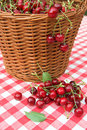 Red Picnic Cloth With cherry Royalty Free Stock Photo
