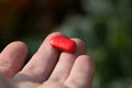 Red pill. Royalty Free Stock Photo