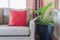 Red pillow on sofa with plant in living room Royalty Free Stock Photo