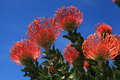 Red pincushion Royalty Free Stock Photo
