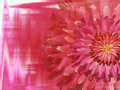 Red pink autumn flowers on red pink blurred background closeup bright floral composition holiday card a collage of co colors Stock Photo