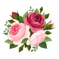 Red and pink roses illustration of english rose buds leaves isolated on a white background Royalty Free Stock Images