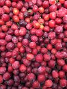 stock image of  Red plum in large quantities