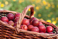 Red plums Royalty Free Stock Photography
