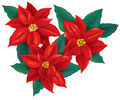 Red poinsettia christmas flower contains transparent objects eps Stock Photography