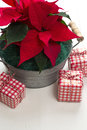 Red poinsettia flower in a zinc tub with three christmas present boxes Royalty Free Stock Images