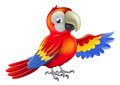 Red pointing cartoon parrot a macaw or showing something with his wing Stock Images