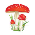 Red poison mushroom isolated on white background with grass vector illustration set death cup illustration Royalty Free Stock Photos