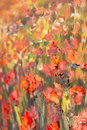 Red poppies flowers painting. Macro Close up fragment