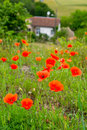 Red poppies in France Royalty Free Stock Photo
