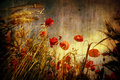 Red poppies in grunge background Royalty Free Stock Photo