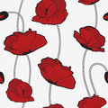 Red poppies seamless pattern Stock Photos