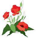 Red poppies vector illustration of isolated on white Stock Photos