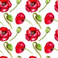 Red poppies watercolor seamless pattern on white background hand drawing