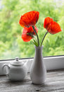 Red poppies in a white vase Royalty Free Stock Photo