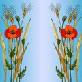 Red poppy in blue style vector illustration of on a background Stock Image