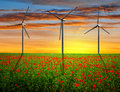 Red poppy field with wind turbines in the sunset Royalty Free Stock Images