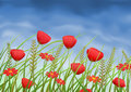 Red poppy-flowers and daisies on summer meadow Stock Photos
