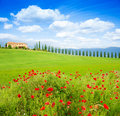 Red poppy flowers in Tuscany landscape, Italy Royalty Free Stock Photo