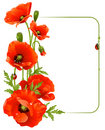 Red poppy frame Stock Image