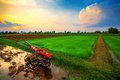 Red power tiller in rice field on sunset Royalty Free Stock Photo