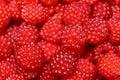 Red raspberries Royalty Free Stock Photo