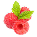 Red raspberries with green leaves isolated on white background a closeup of three fresh tiny a Stock Photos