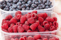 Red raspberries a plastic tray with several raspberries raspberry rubus idaeus also called or occasionally Royalty Free Stock Photos