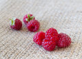 Red raspberries still life image macro shot bunch of organic on jute burlap texture background Royalty Free Stock Image