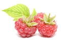 Red raspberry fruits on white background Stock Photography