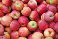 Red ripe apple Stock Photography