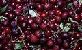 Red ripe cherry berries Royalty Free Stock Photo