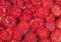 Red ripe raspberries background Stock Images