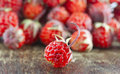 Red ripe strawberry Royalty Free Stock Photo