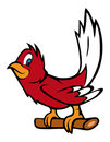 Red robin bird Royalty Free Stock Photo