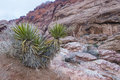Red rock canyon near las vegas nevada Royalty Free Stock Photo