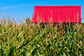 Red Roof in a Corn Field Stock Image