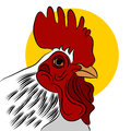 Red rooster an image of a Royalty Free Stock Images