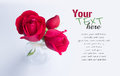 Red rose beautiful roses with easy removable sample text Stock Images
