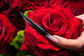 Red rose and black nail Royalty Free Stock Images