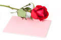 Red rose with blank card gift on white Royalty Free Stock Photo