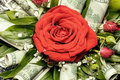 Red rose in bouquet decorated with hundred dollars notes ideal gift for celebration christmas and new year Royalty Free Stock Photos