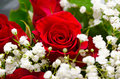 Red rose bouquet with white flowers around it Royalty Free Stock Photos