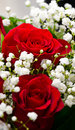 Red rose bouquet with white flowers around it Stock Image